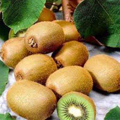 Kiwi plant vruchten - Kwekerij Bakker