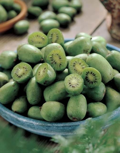 Mini Kiwi vruchten - Kwekerij Bakker